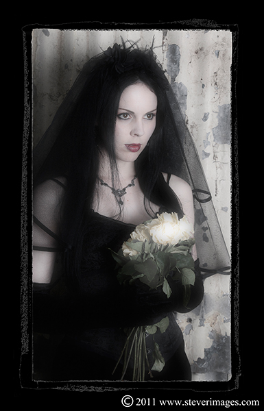 Dracula's Bride, yellow roses