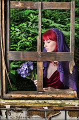 Remembrance, purple flowers, old window, tin chapel