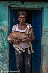 Portrait, Indian man with goat