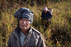 Portrait, Nepal, Harvest time, fields