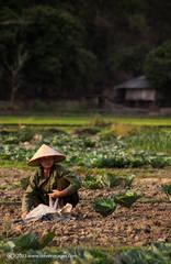 Mai Chau Valley, People at work, North Vietnam.