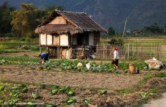 House, Mai Chau valley, North Vietnam