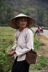 Field, local worker, North Vietnam countryside