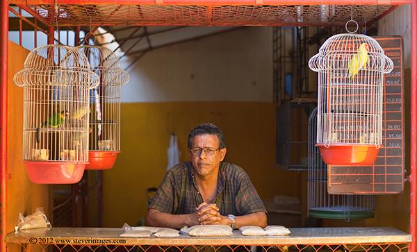 Pets, Portrait, Market, Havana, cuba, Image of market on the outskirts of Havana