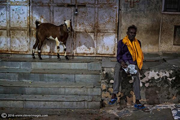 Goat, Indian man, photo