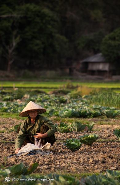 Mai Chau Valley, People at work, North Vietnam., photo