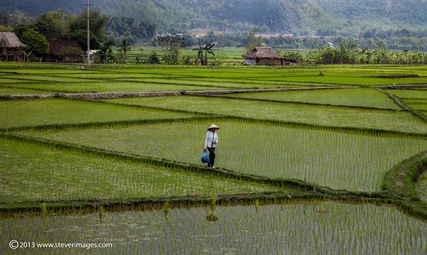 Rice field, Mai Chau valley, North Vietnam, photo